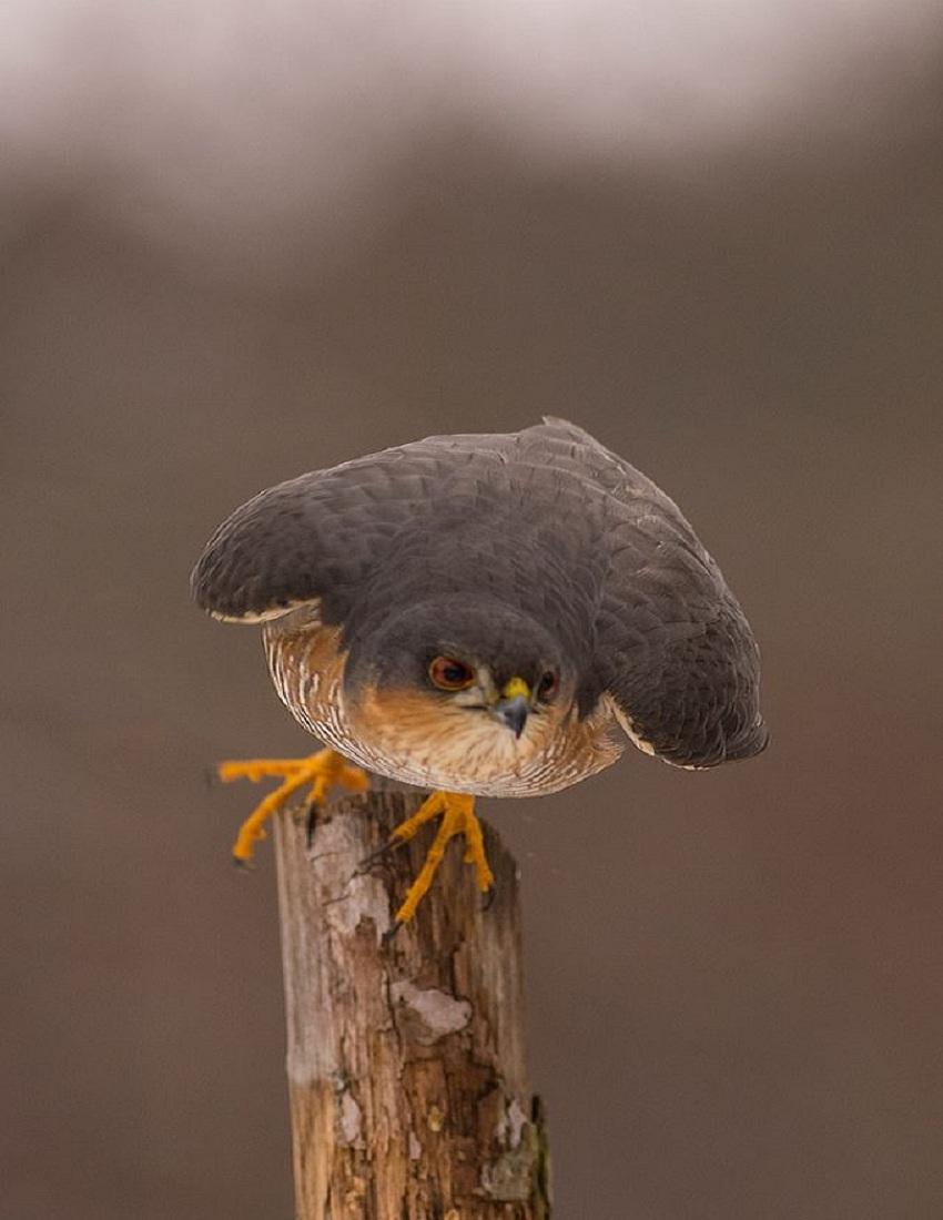 https://www.transylvania-tours.ro/files/pages/450_harghita_bird_Eurasian.jpg